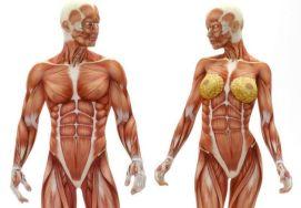 Cuantos-musculos-tiene-el-cuerpo-humano-2