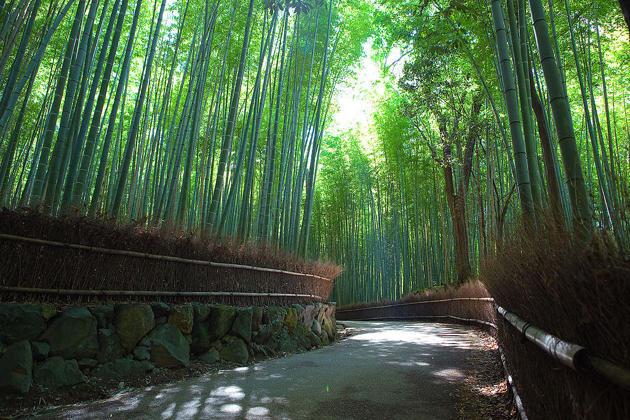 d43afe00-6beb-11e4-93d8-b77a2c90da6c_Sagano_Bamboo_forest-