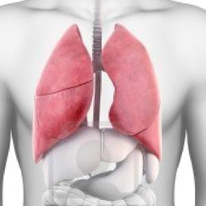 pulmones (1)