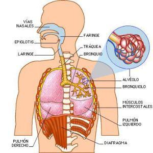sistema_respiratorio